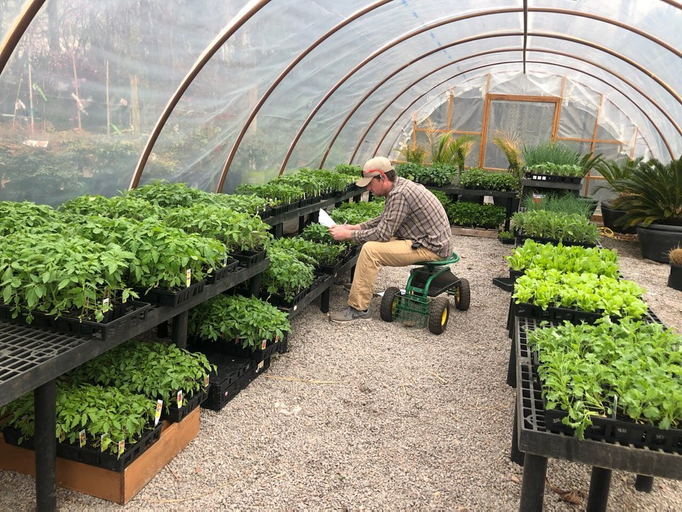 vegetables and herbs at Jack Frost garden center