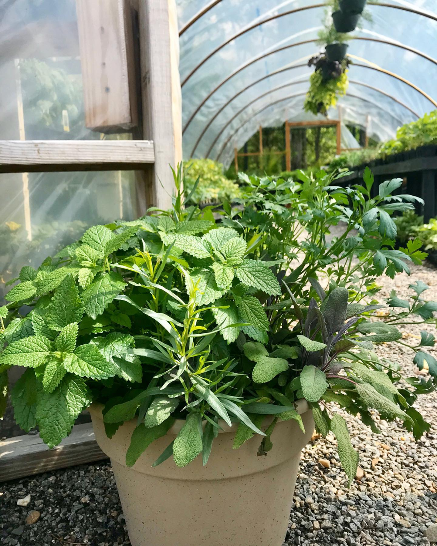 herb combo pots at Jack Frost garden center